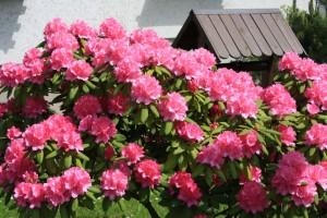 in diesem Sinne hoffen wir auf einen baldigen Frühling
