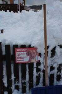 oder am Zaun ... fragt sich nur wo der Rigdeback ist?