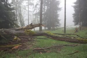 Nebel wo man sich auch bewegt in Thüringen